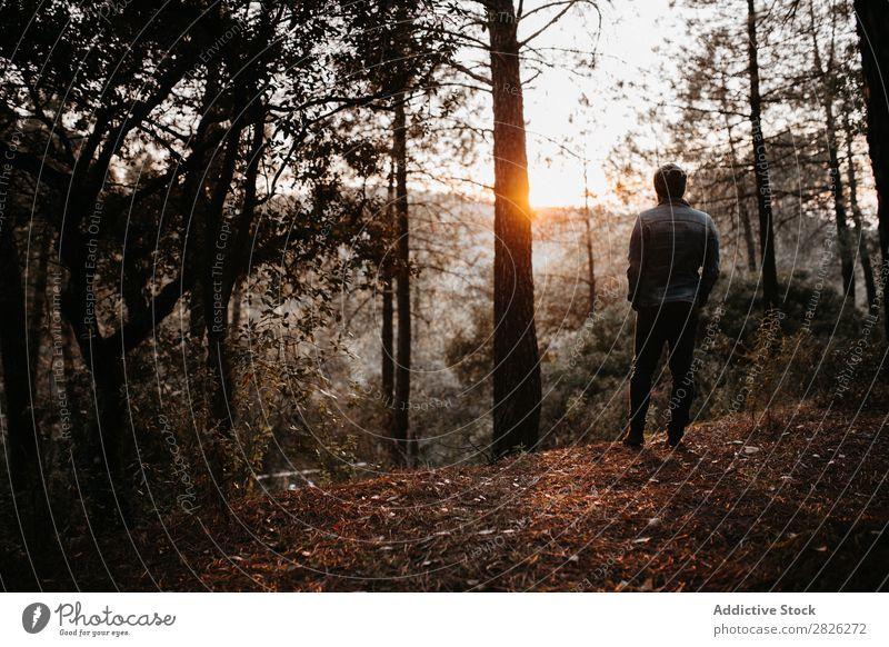 Man admiring a landscape Tourist Forest Backpack Autumn Landscape Youth (Young adults) Rural Nature Relaxation Silent Stand Vacation & Travel Human being