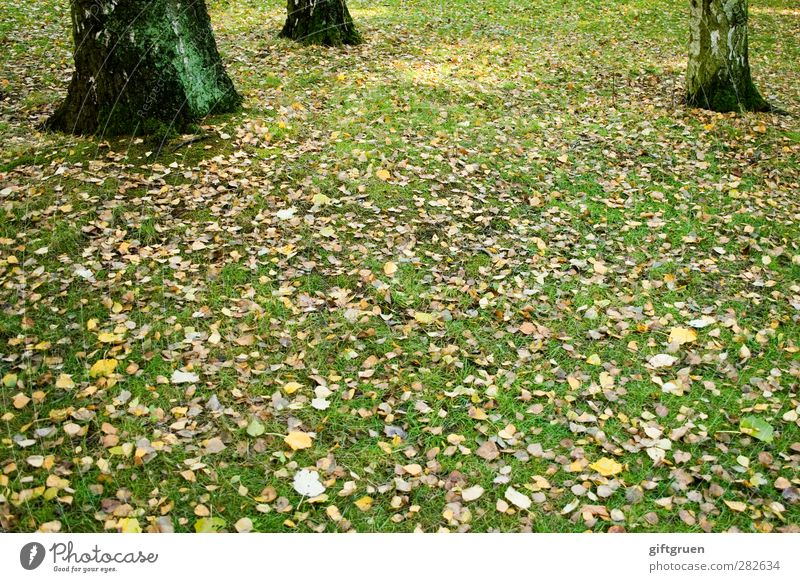 Nature Summer Plant Tree Leaf Environment Meadow Autumn Grass Lie Beautiful weather Transience To fall End Seasons Tree trunk