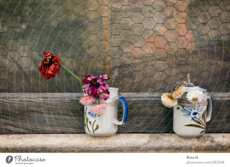 Flowers for the hero II Mug Blossom Faded Authentic Grateful Past Transience honour worship Wire netting Protection Painting and drawing (object) Heartrending