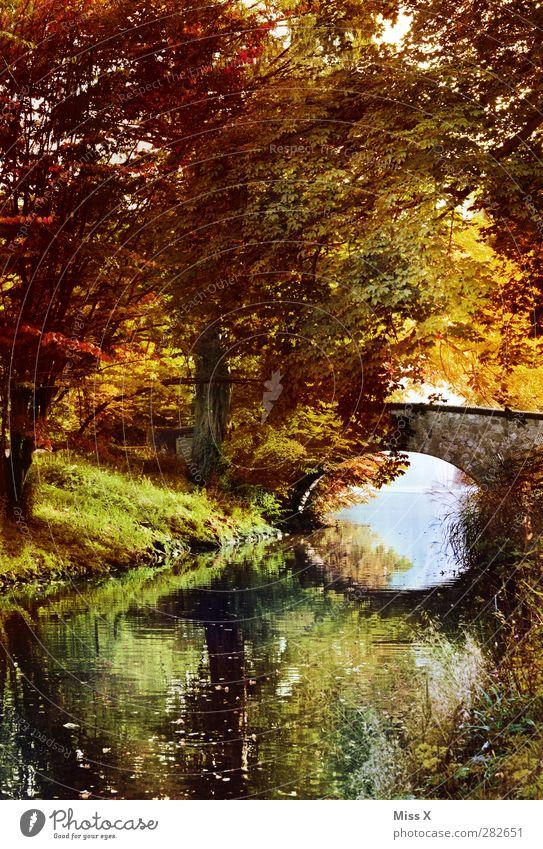autumn Nature Landscape Autumn Tree Bushes Park Brook Bridge Multicoloured Autumn leaves Autumnal Autumnal colours Early fall Automn wood Autumnal landscape