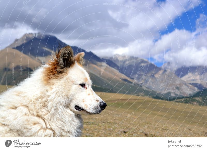 Dog Sky Nature Loneliness Clouds Mountain Freedom Rock Adventure Peak Pelt Animal face High mountain region Dog's snout Puppydog eyes Dog's head