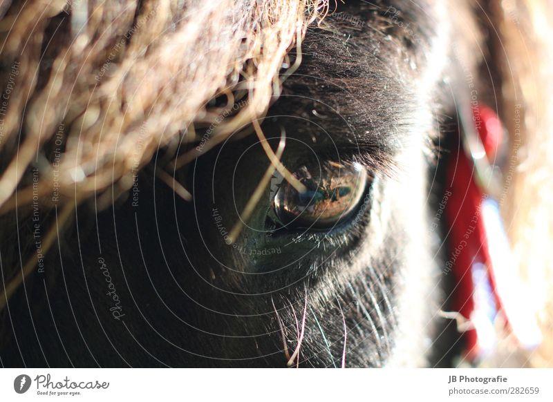 spiritual life Animal Pet Farm animal Horse 1 Observe Love Brown Red Black Happy Contentment Joie de vivre (Vitality) Willpower Trust Love of animals
