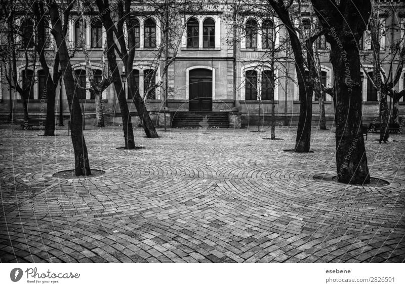 Square with trees Vacation & Travel Tourism Summer Winter Mountain Garden Nature Landscape Tree Park Village Town Building Architecture Street Stone New