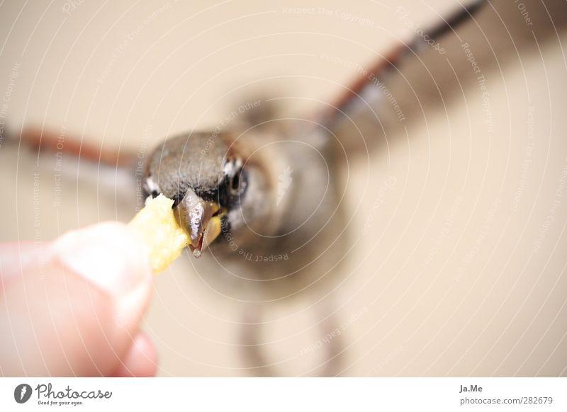Animal Yellow Bird Brown Flying Gold Wild animal Wing Animal face To feed Beak Feeding Sparrow French fries Birdseed Tree sparrow