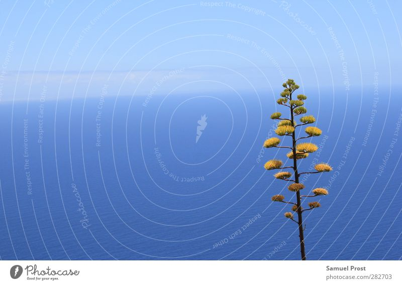 TREE Exotic Summer Ocean Nature Water Sky Horizon Beautiful weather Plant Tree Cactus Infinity Blue Yellow Loneliness Individual Colour photo Exterior shot