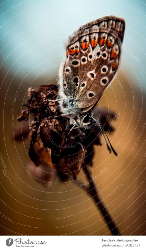 Nature Animal Wild animal Insect Butterfly
