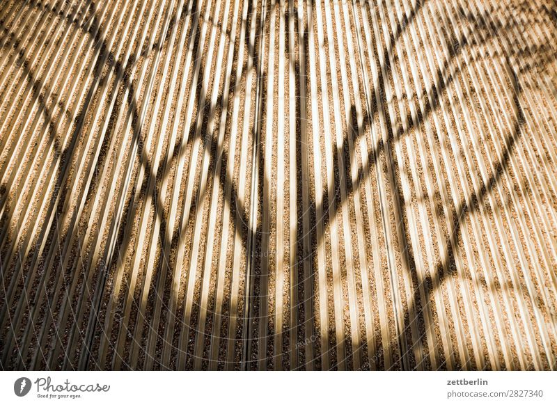 Shadow on a wall Branch Tree Facade Spring Seam Autumn Light Wall (barrier) Deserted Parallel Perspective Tree trunk Copy Space Wall (building) Concrete Twig