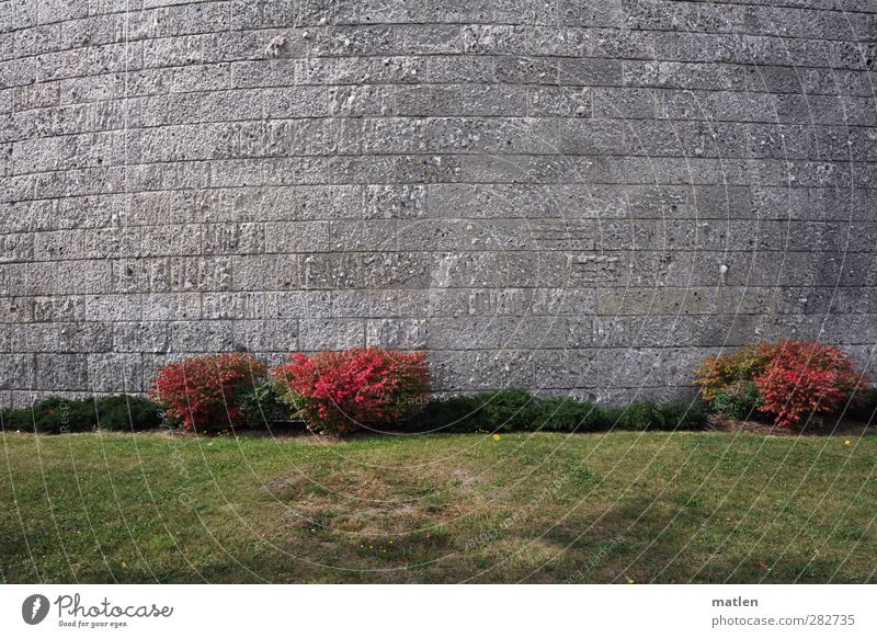 flush Grass Bushes Deserted Manmade structures Wall (barrier) Wall (building) Facade Stone Gray Green Red Shame arched Colour photo Exterior shot