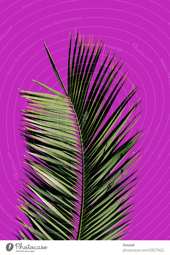 palm tree on purple background Lifestyle Style Summer Nature Plant Elements Tree Leaf Garden Fashion Authentic Exceptional Cool (slang) Beautiful Uniqueness