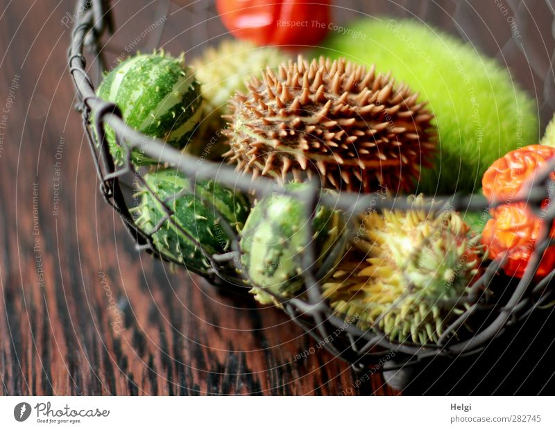 autumn fruits Autumn Fruit Basket Wire basket Wood Metal Lie Living or residing Esthetic Exceptional Beautiful Small Natural Thorny Brown Gray Green Orange