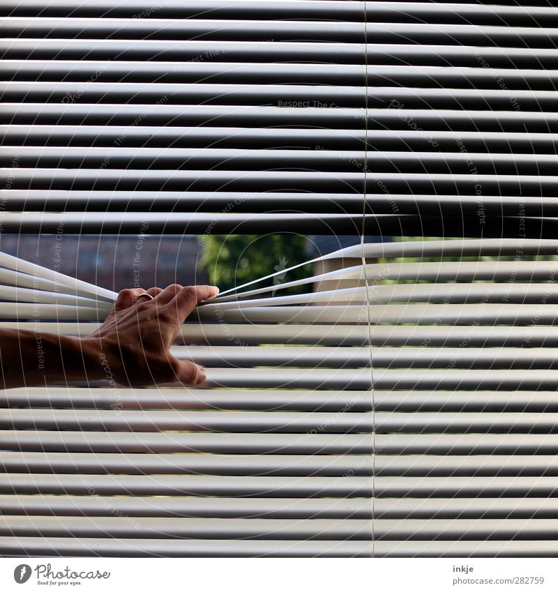 blues Living or residing Flat (apartment) Venetian blinds View from a window Life Hand 1 Human being Garden Window To hold on Looking Dark Long Gloomy Emotions