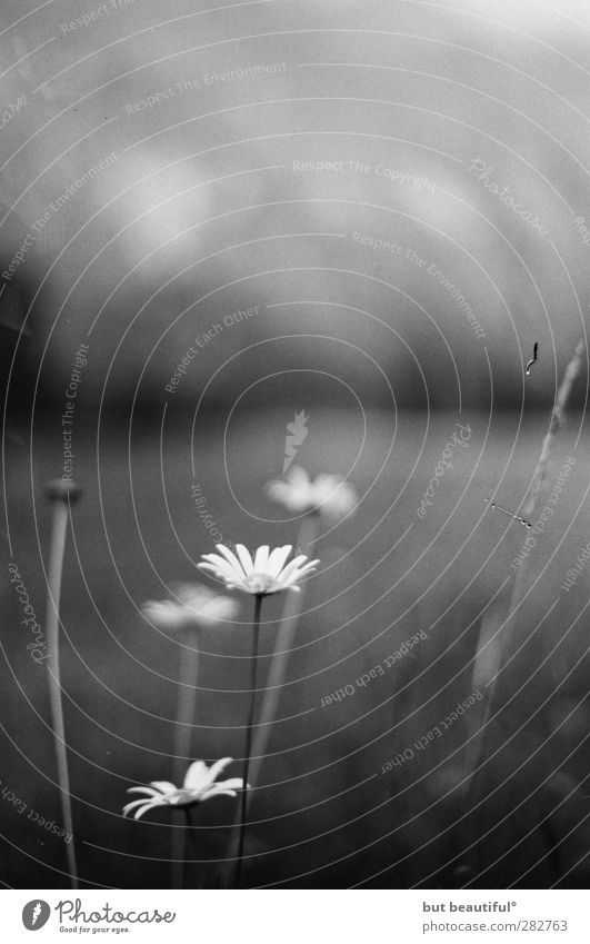 flower photo° Environment Nature Plant Spring Summer Flower Grass Meadow Moody Black & white photo Exterior shot Deep depth of field