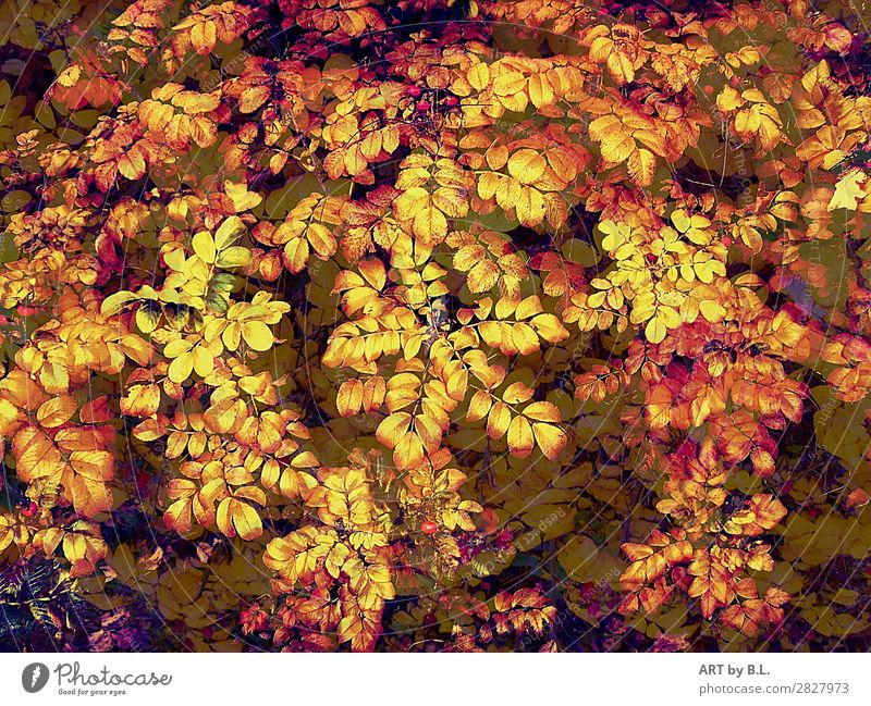 all leaves Environment Nature Summer Autumn Plant Bushes Agricultural crop Yellow Gold Green Red Beautiful Equal Colour photo Exterior shot Detail Morning Day