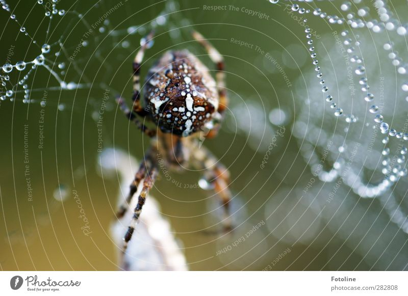 Nature Water Animal Environment Autumn Natural Bright Wild animal Drops of water Wet Elements Crucifix Spider Cross spider