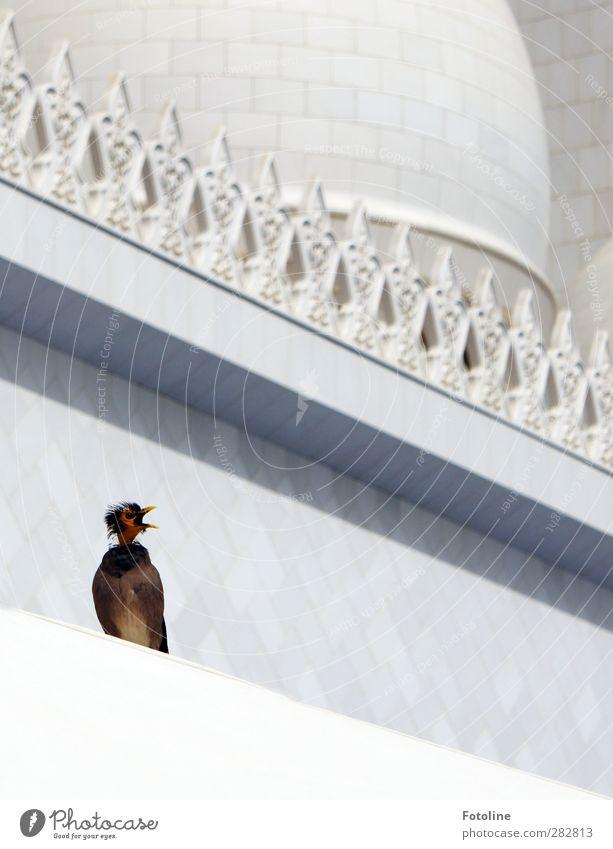White Animal Building Bright Bird Natural Wild animal Scream Beak Mosque