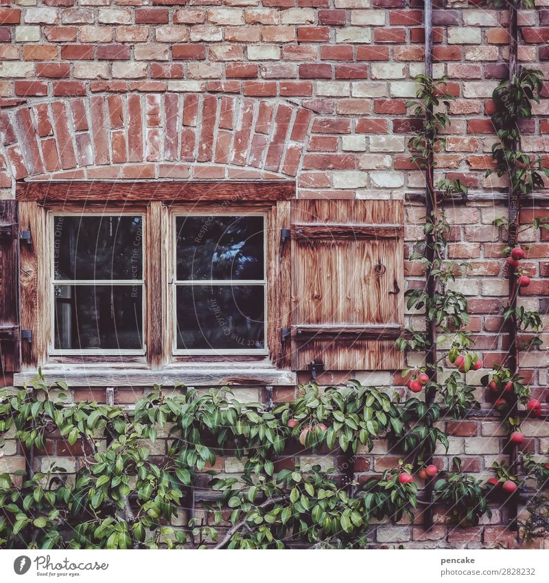 always on the wall long Food Fruit Apple Environment Nature Summer Tree Old town House (Residential Structure) Wall (barrier) Wall (building) Window Esthetic