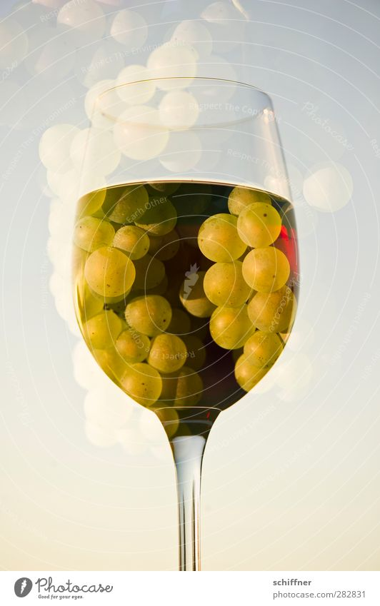 Fruit Glass Food Nutrition Beverage Vine Wine Fluid Double exposure Alcoholic drinks Bunch of grapes Wine glass Red wine White wine Grape juice Redwine glass