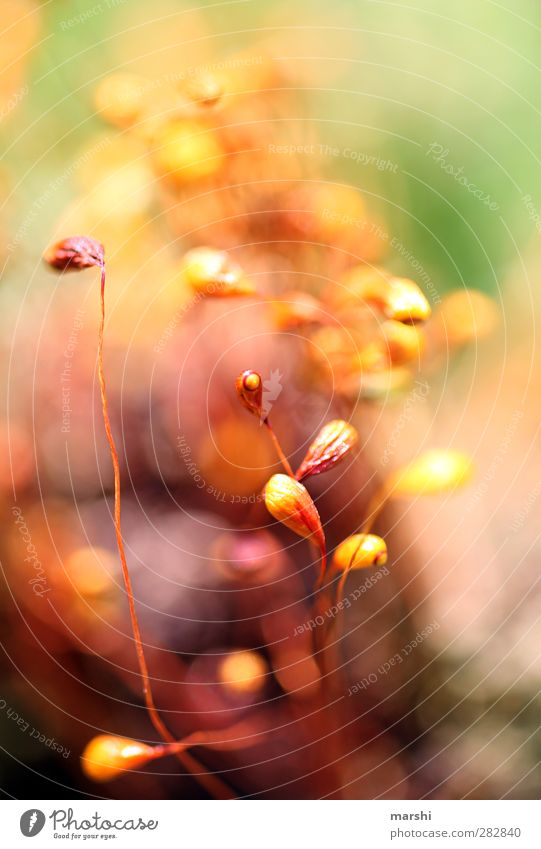 microcosm Nature Plant Animal Flower Grass Moss Yellow Green Orange Red Abstract Blur Colour photo Exterior shot Close-up Detail Macro (Extreme close-up)