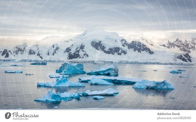 Antarctica Wild Nature Landscape Ice Cold Ocean South Iceberg Snow warming wildlife polar Climate Bird Penguin Colony Exterior shot White Bay Vacation & Travel