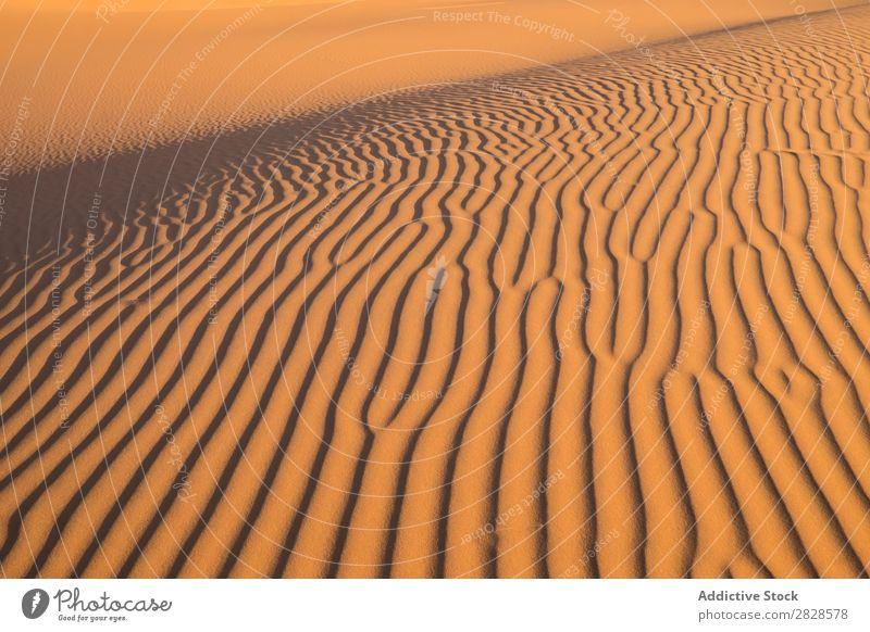 Wavy sandy hill Hill Sand Desert Waves Sunset Nature Summer Dry