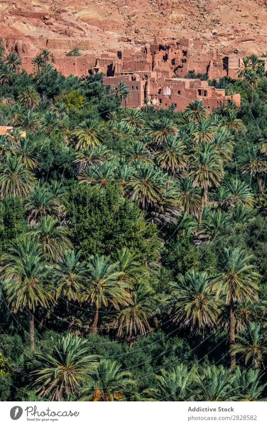 Tropic forest and sandy town Palm of the hand Forest Tropical Town Sand Wall (building) Nature Green Leaf Virgin forest Natural Summer Tree Landscape Plant
