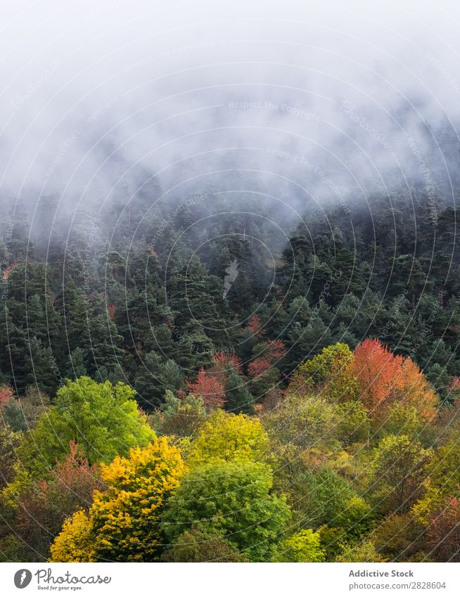 Foggy autumn forest Forest Autumn Evergreen Landscape Nature