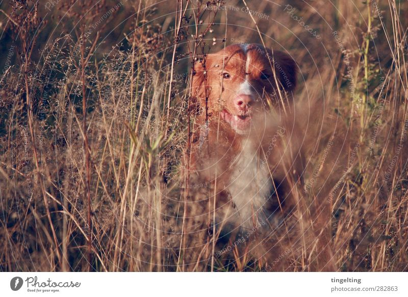 Dog Nature Green Plant Red Joy Animal Yellow Environment Warmth Autumn Movement Brown Natural Gold Glittering