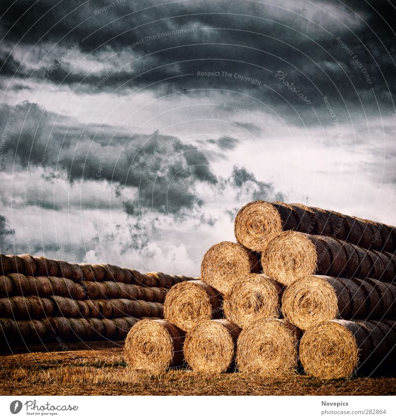 Army of Straw Bales Summer Agriculture Forestry Nature Landscape Sky Clouds Autumn Weather Storm Agricultural crop Field Line Feeding To dry up Threat Cold