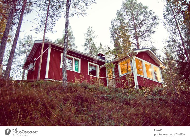 Vacation & Travel Calm House (Residential Structure) Forest Window Freedom Building Garden Flat (apartment) Living or residing Longing Illuminate Hut