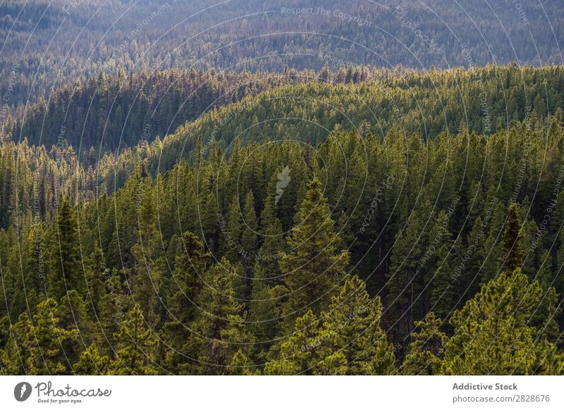 Evergreen forest from above Forest coniferous Tree Surface Landscape Environment Beauty Photography Green fir Wilderness Abstract tranquil Natural Idyll Scene