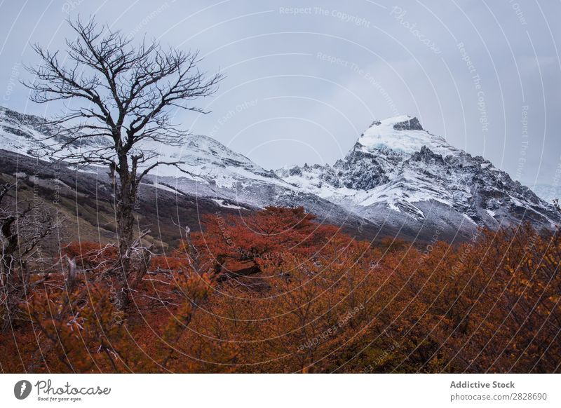 Bare trees on background of mountains Panorama (Format) Dune Mountain Autumn Snow Landscape Forest Wilderness Vantage point Tree Range Nature Environment
