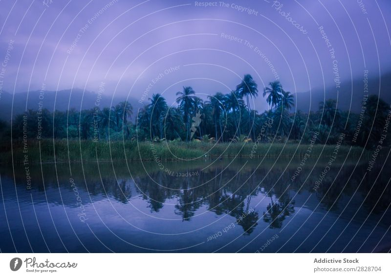 Tropical shore of lake in mist Coast Fog Palm of the hand Landscape Idyll Virgin forest Nature