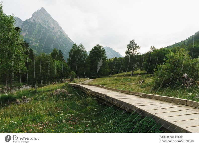 Wooden path in mountains Mountain Meadow Vantage point Lanes & trails Small Landscape Summer