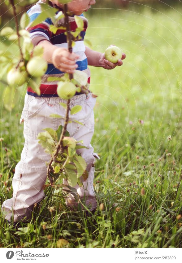 Human being Child Nature Summer Tree Meadow Autumn Grass Garden Healthy Park Infancy Food Fresh Nutrition Sweet