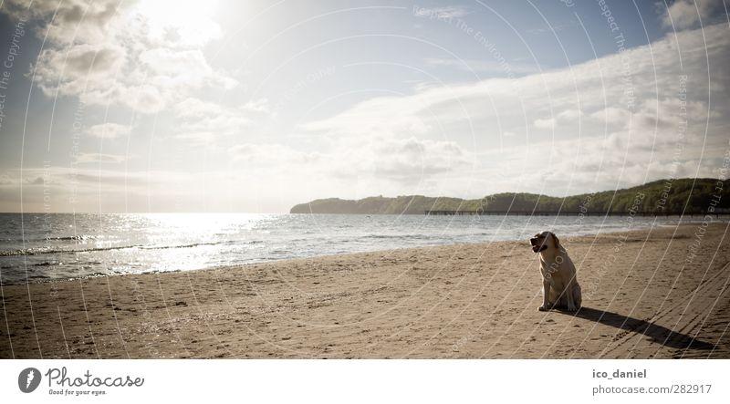 Dog Vacation & Travel Water Joy Beach Animal Yellow Coast Sand Sit Leisure and hobbies Trip Beautiful weather Pet Anticipation Labrador