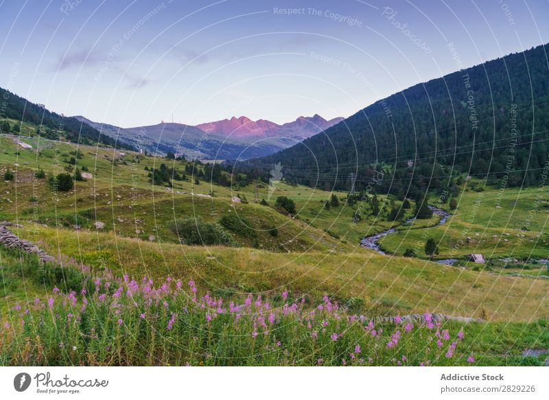 Beautiful nature view Valley Nature Hill Flower Meadow Landscape Mountain Vacation & Travel Forest Environment Vantage point Tourism Green Clouds
