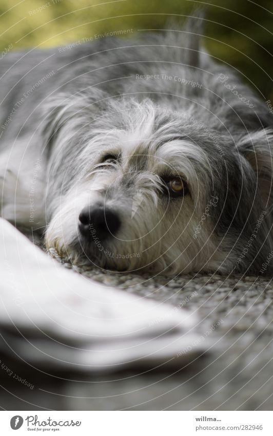 Dog Animal Relaxation Lie Observe Newspaper Pet Rest Knockout Dog's snout