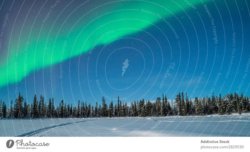 Northern woods at night Winter Nature Cold Forest polar light Stars Sky Night Dusk Covered Snow Seasons White Landscape Ice Frost Vacation & Travel Mountain