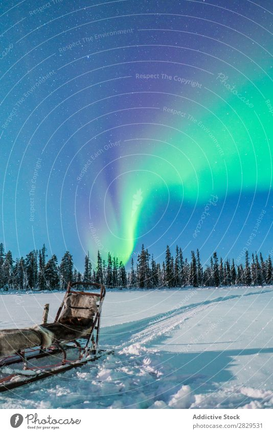 Sled in winter forest Winter Nature Cold North polar light sled Forest Night Sky starry Covered Snow Seasons White Landscape Ice Frost Vacation & Travel