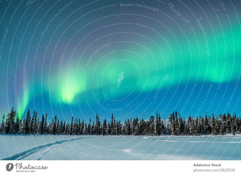 Winter woods and polar light Nature Cold North Covered Forest Night Evening Snow Seasons White Landscape Ice Frost Vacation & Travel Mountain Beautiful Weather