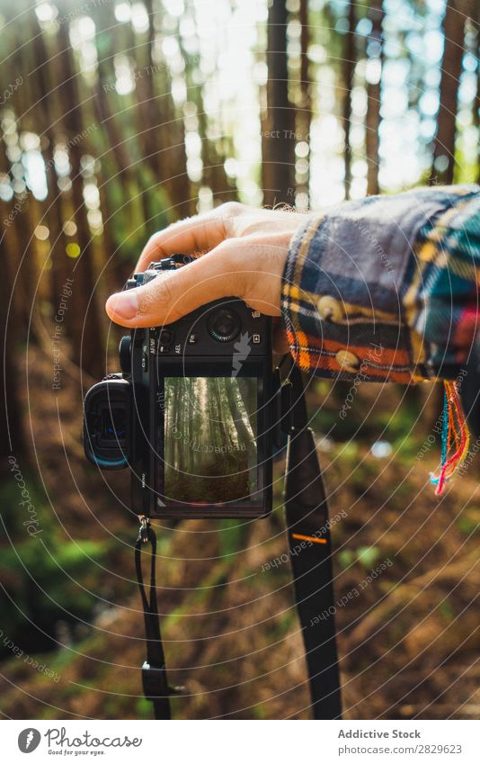 Hand taking shot of forest Human being Tourist Forest Green Nature Camera Take Screen