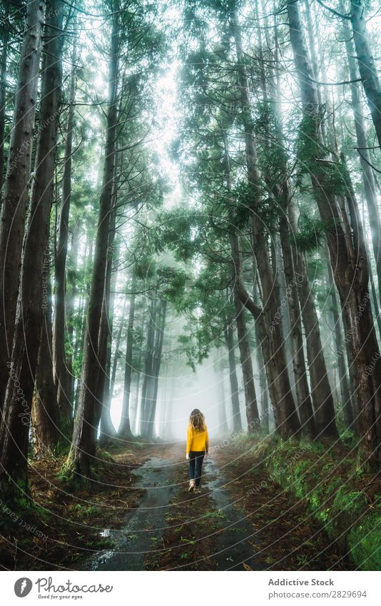 Woman walking in forest Forest Green pretty Vacation & Travel Tourism Loneliness Nature Landscape Tree Trunk Plant Park Seasons Fog Environment Scene Beautiful
