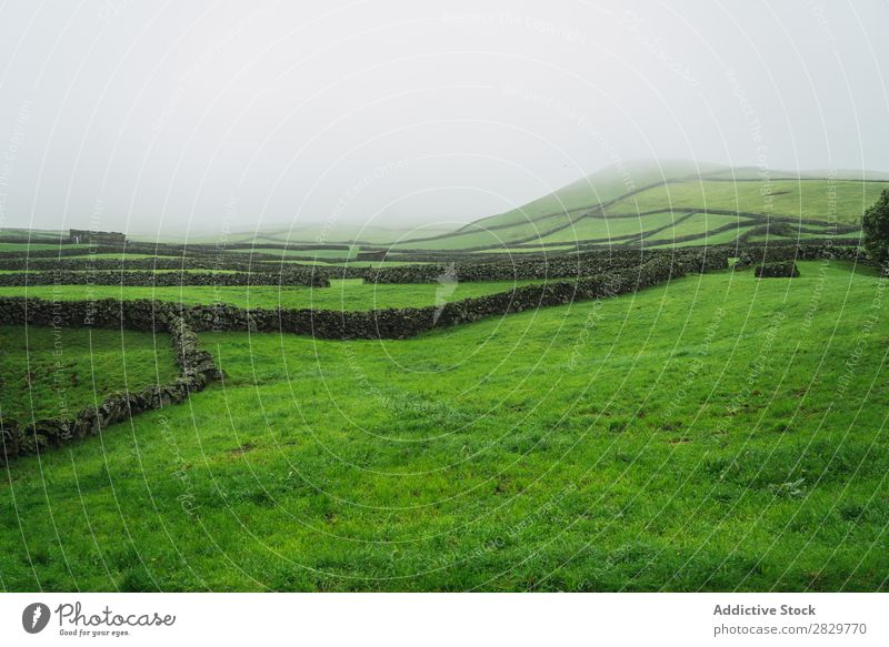 Green foggy field with fence Field Vantage point Nature Fence Landscape Stone Fog Grass Meadow Rural Clouds Seasons Environment Scene Beautiful Agriculture