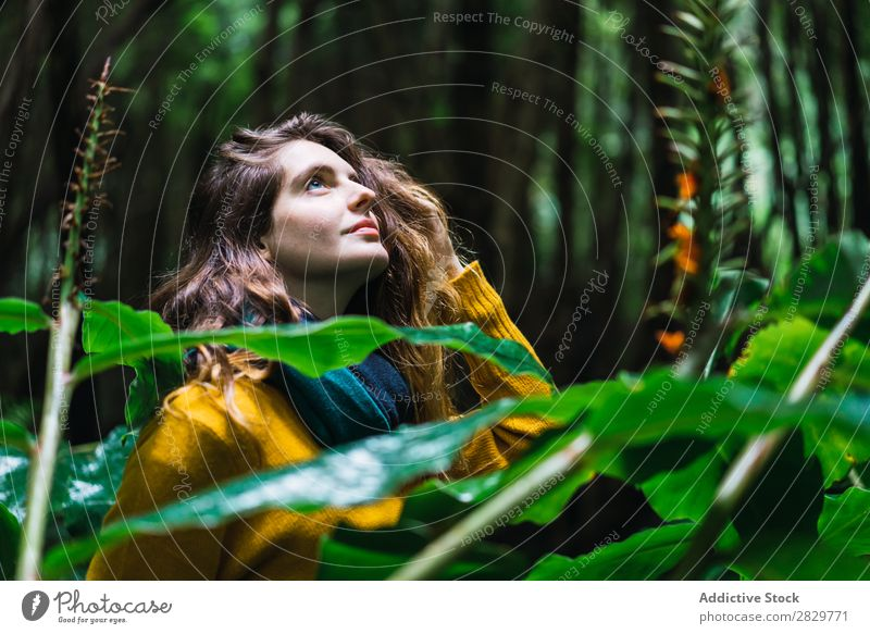 Woman looking up in forest Forest Green pretty Vacation & Travel Tourism Loneliness Nature Landscape Tree Trunk Plant Park Seasons Fog Environment Scene