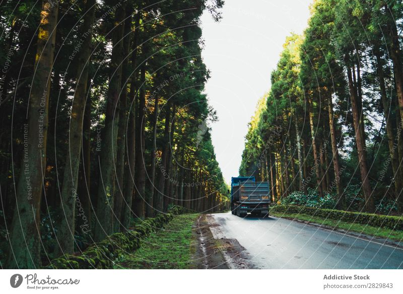 Truck driving through forest Street Asphalt Forest Green Driving Nature Environment