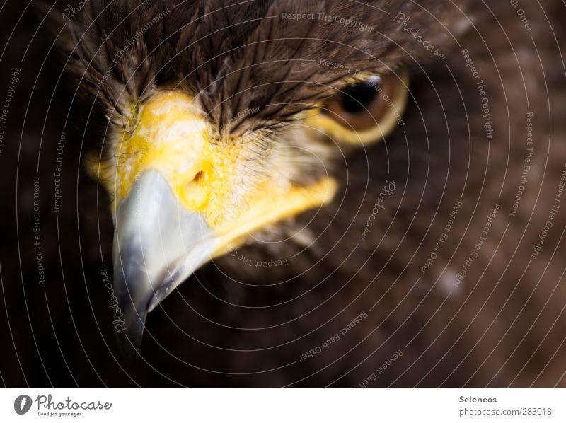 good visibility Freedom Eyes Environment Nature Animal Wild animal Bird Animal face Beak Feather Plumed 1 Esthetic Threat Near Natural Colour photo