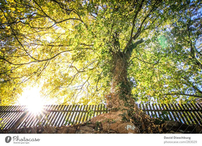 Moments of peace Nature Cloudless sky Spring Autumn Beautiful weather Plant Tree Garden Park Blue Yellow Green Black White Fence Autumnal Early fall