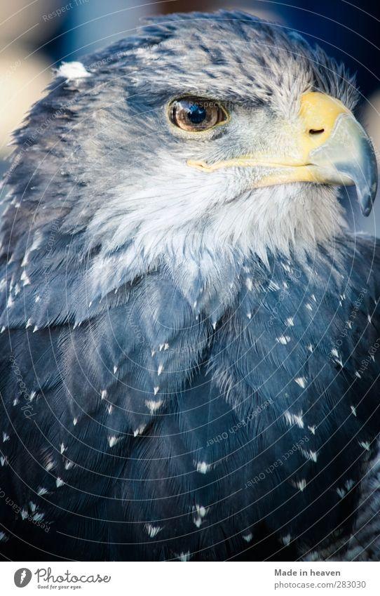 Blue Animal Bird Power Wild animal Stand Wing
