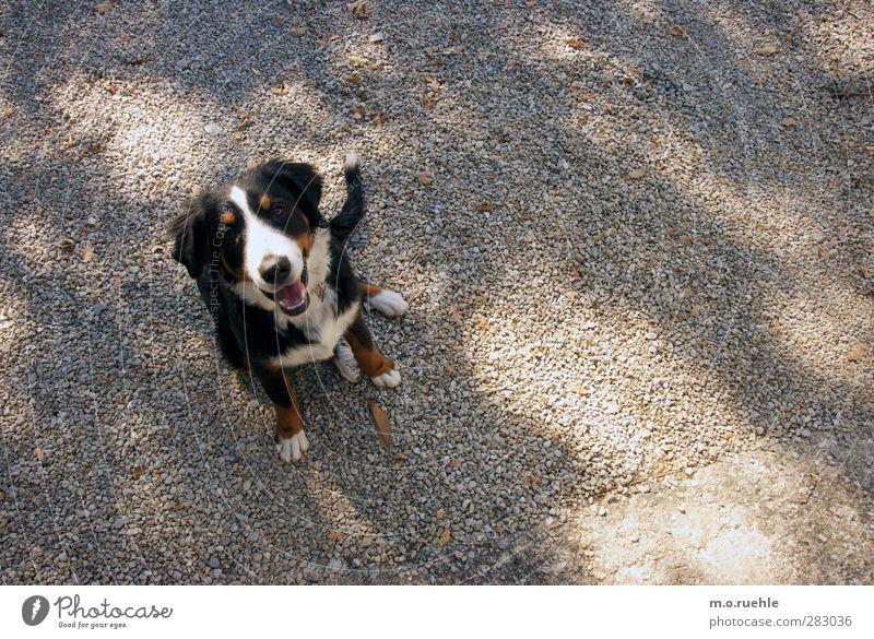 Dog Nature Beautiful Joy Animal Environment Happy Park Leisure and hobbies Wait Authentic Free Happiness Lifestyle Friendliness Joie de vivre (Vitality)