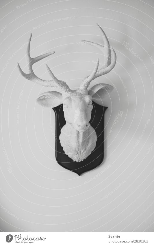 White deer head sculpture on white wall Animal Black Background picture Interior design Wall (building) Art Germany Wall (barrier) Design Decoration Modern